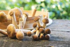 Funghi su di legno Immagini Stock Libere da Diritti