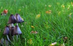 Funghi su erba verde fotografia stock
