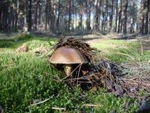 Funghi su erba verde un giorno soleggiato Immagini Stock Libere da Diritti