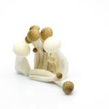 Funghi su priorità bassa isolata Fotografia Stock