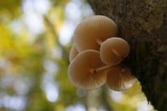 Funghi su un albero Fotografia Stock Libera da Diritti