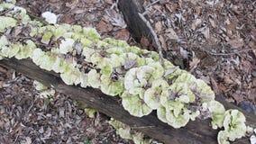 Funghi su un albero morto stock footage