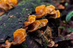 Funghi su un ceppo Fotografie Stock Libere da Diritti