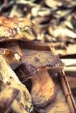 Funghi su un cestino di vimine Fotografia Stock