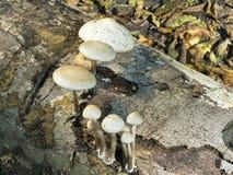 Funghi su un tronco di albero Immagini Stock Libere da Diritti