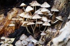 Funghi sul ceppo di decomposizione Immagini Stock Libere da Diritti