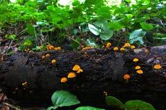 Funghi sul legno Fotografia Stock Libera da Diritti