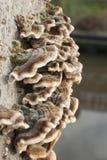 Funghi sul tronco di albero stagionato Immagine Stock