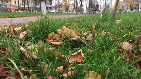 Funghi sul viale della città video d archivio