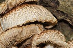 Funghi sull'albero Fotografie Stock Libere da Diritti