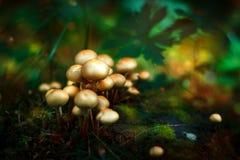 Funghi tossici di favola in foresta Immagini Stock