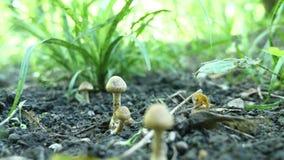 Funghi tossici nel fuoco selettivo della foresta Immagine Stock