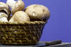 Funghi in un canestro Fotografie Stock