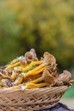 Funghi in un canestro Fotografia Stock