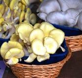 Funghi in un cestino. immagini stock