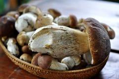 Funghi in un cestino Fotografie Stock