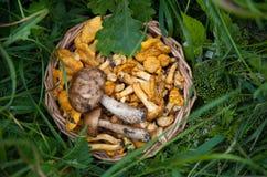 Funghi in un cestino immagini stock libere da diritti