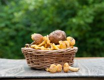 Funghi in un cestino immagine stock