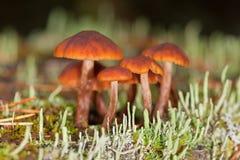 Funghi in un muschio Immagine Stock