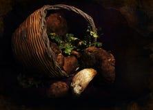 Funghi in una collezione del canestro Fotografia Stock Libera da Diritti