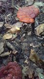 Funghi in una foresta Immagine Stock