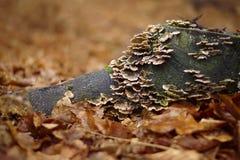 Funghus på den wood stumoen i mest forrest Royaltyfri Fotografi