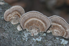 Fungi Stock Photography