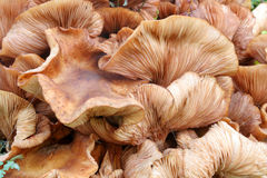 Fungi Stock Photography