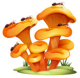 Fungi with ants Stock Photo