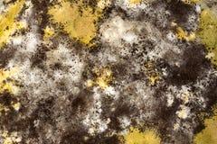 Fungi background of horizontal Royalty Free Stock Photography