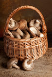 Fungi in a basket. Little basket filled with mushrooms or fungi royalty free stock photography