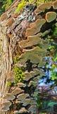 Fungi - Bottom Side Up Stock Photo