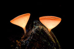 Fungi cup in the wild on painting light at the night Royalty Free Stock Photos