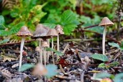 Fungi Royalty Free Stock Photos