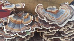 Fungi royalty free stock photo