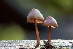 Fungi growing on dead wood Stock Photo