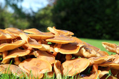 Fungi growing in grass, low view. Stock Photo