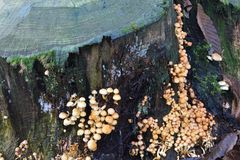 Fungi growing on tree trunk Stock Images