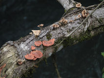 Fungi growth on dead tree Stock Photos