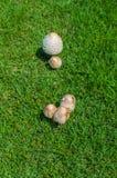 Fungi mushroom on Grass green Stock Photos