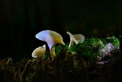 Fungi Royalty Free Stock Images