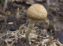 Fungi Royalty Free Stock Image