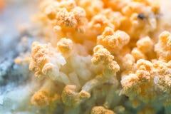 Fungi Stock Image