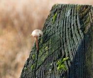 Fungi Royalty Free Stock Photography