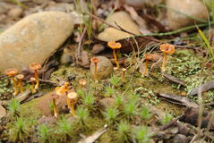 Fungi, South Coast, New South Wales, Australia Royalty Free Stock Photography