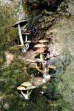 Fungi on a Tree Stock Image