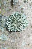 Fungi Tree Mushroom. Wall Plant Royalty Free Stock Image