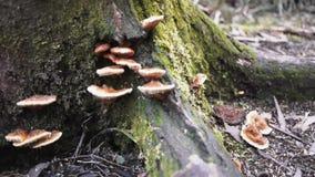 Fungi on tree stock footage