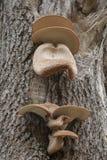 Fungi on Tree on Suomenlinna Island Helsinki Royalty Free Stock Photography