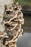 Fungi on weathered tree trunk Stock Image